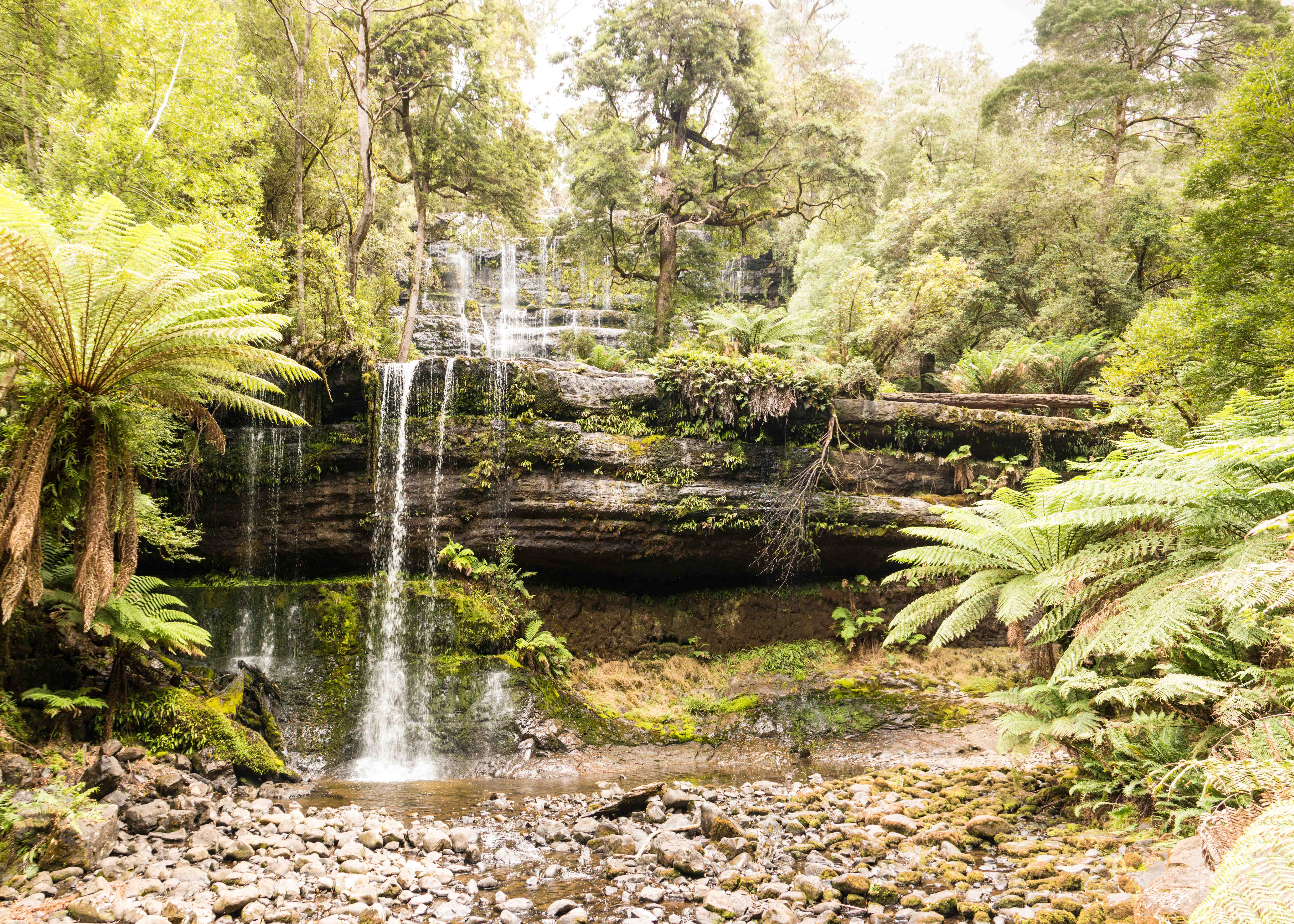 The beautiful Russell Falls, Mount Field National Park.