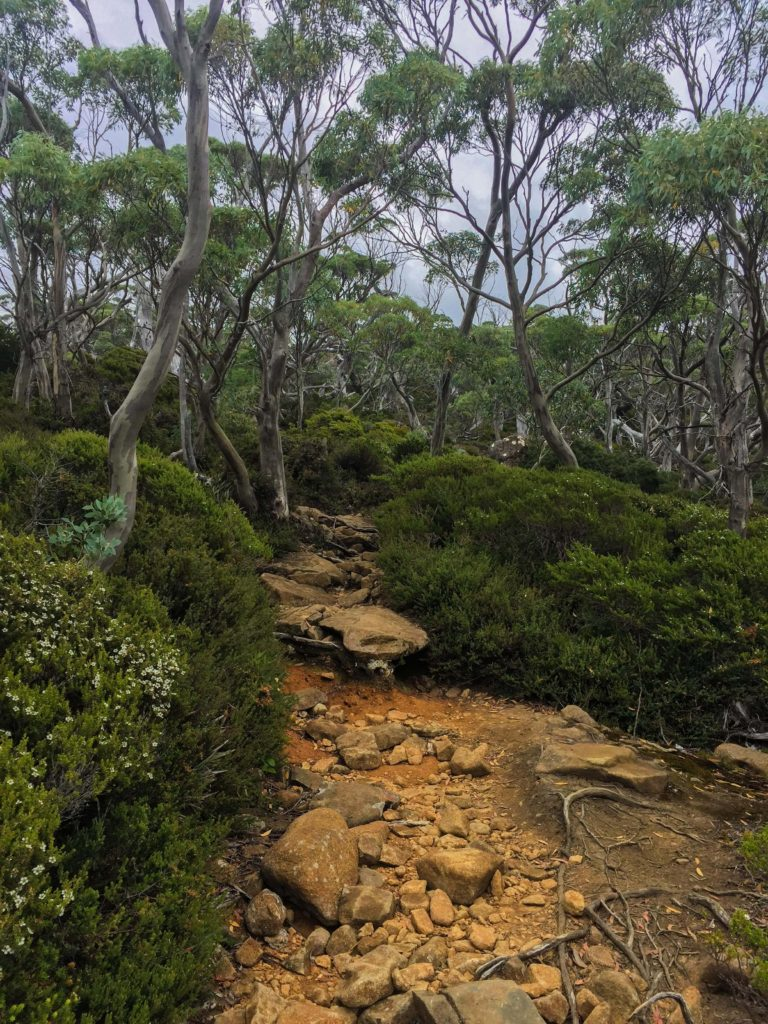 Beautiful gnarled Snow Gums and low flowering bushes.