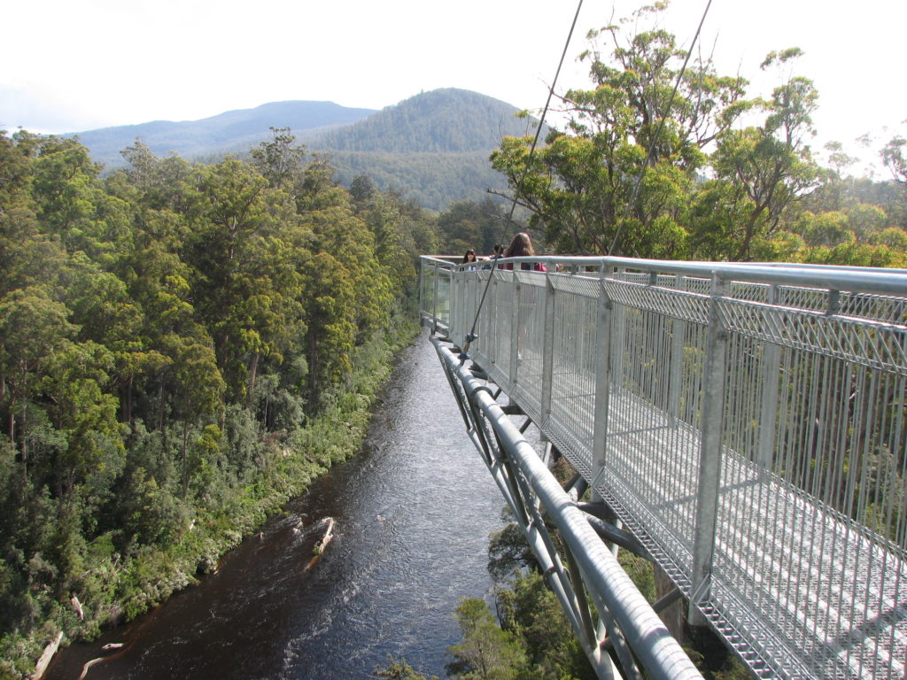 Walk among the trees on the Tahune Air Walk