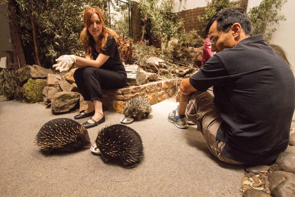 Learn about echidnas about Platypus House.